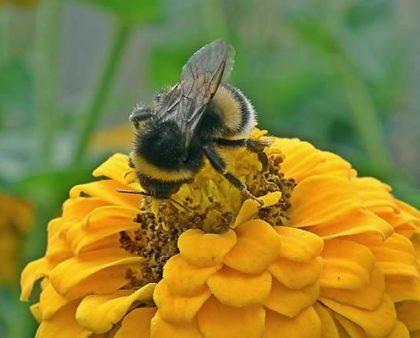 La gran cantidad de nutrientes presentes en el polen de abejas
