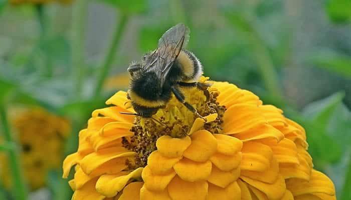 nutrientes presentes en el polen