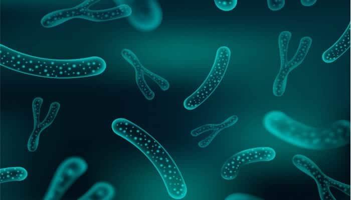 8 Beneficios de los Probióticos para la Salud